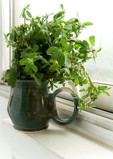 purslane in cup